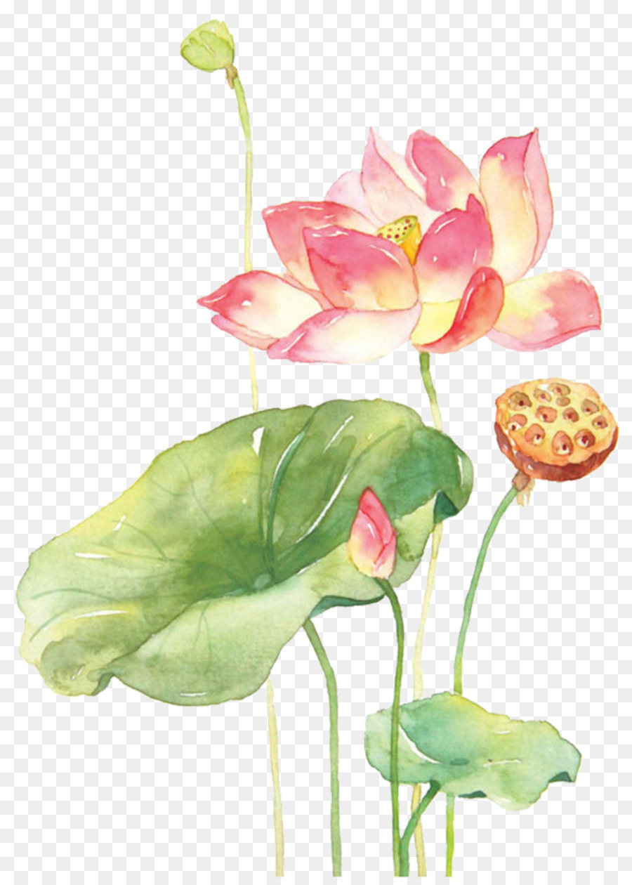 Watercolor Painting Techniques Watercolour Flowers Nelumbo nucifera - painting png download - 1474*2047 - Free Transparent Watercolor Painting png Download.