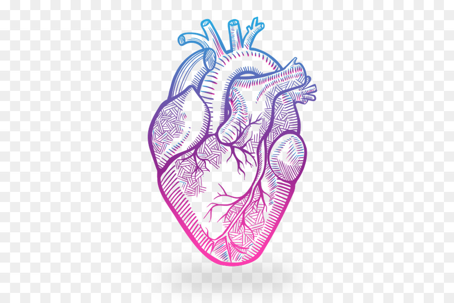 Heart Anatomy Drawing Heart Png Download 600600 Free