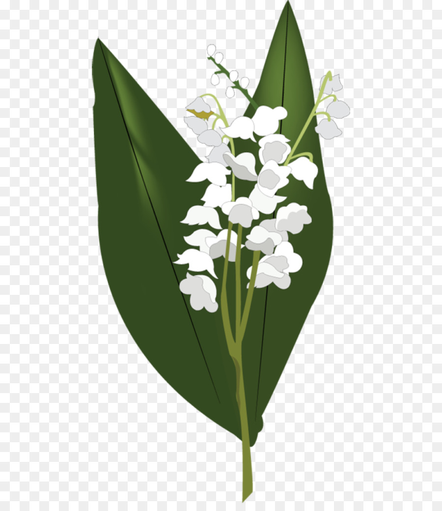 Lily Of The Valley Flower Clip Art Lily Of The Valley Png Download