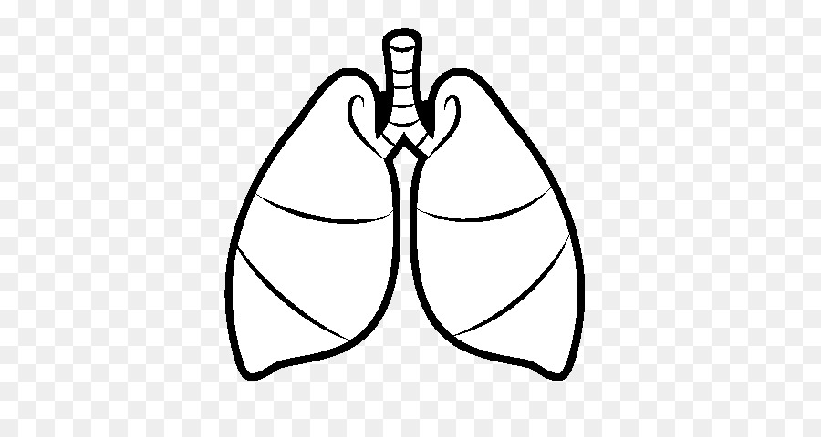 Lung Drawing Breathing Heart Respiratory System