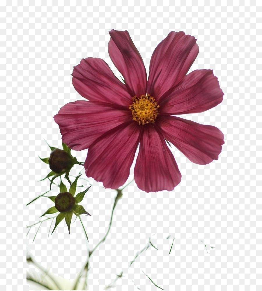 El Estado De Animo De La Junta Ramo De Flores De La Planta Anual De