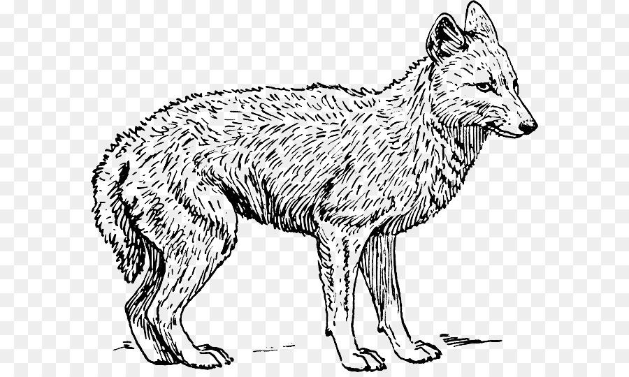 Coyote chacal Dorado libro para Colorear de Perros - Perro Formatos ...