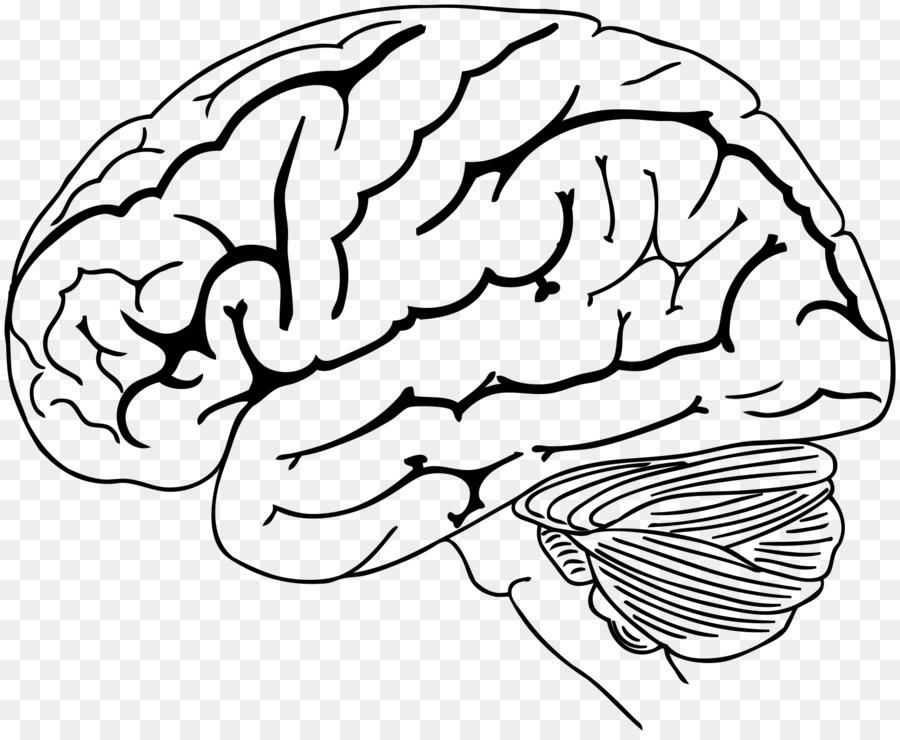 El Cerebro Humano Para Colorear Libro - Cerebro Formatos De Archivo ...