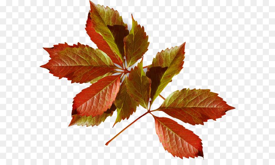 Hoja de otoño de color de Moda de Invierno - otoño Formatos De ...