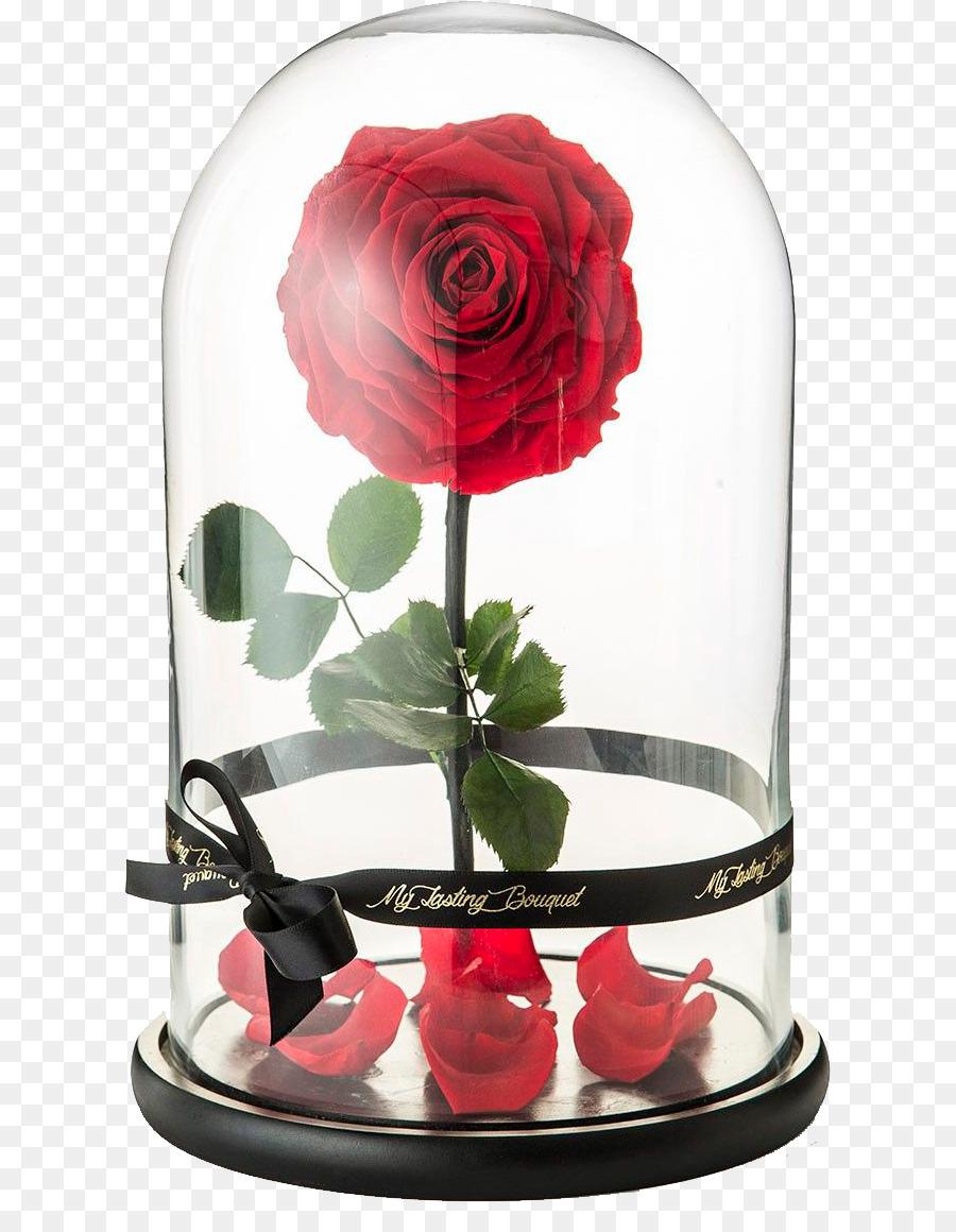 Belle Beast Rose Flower Floral Design Rose Png Download 6641144