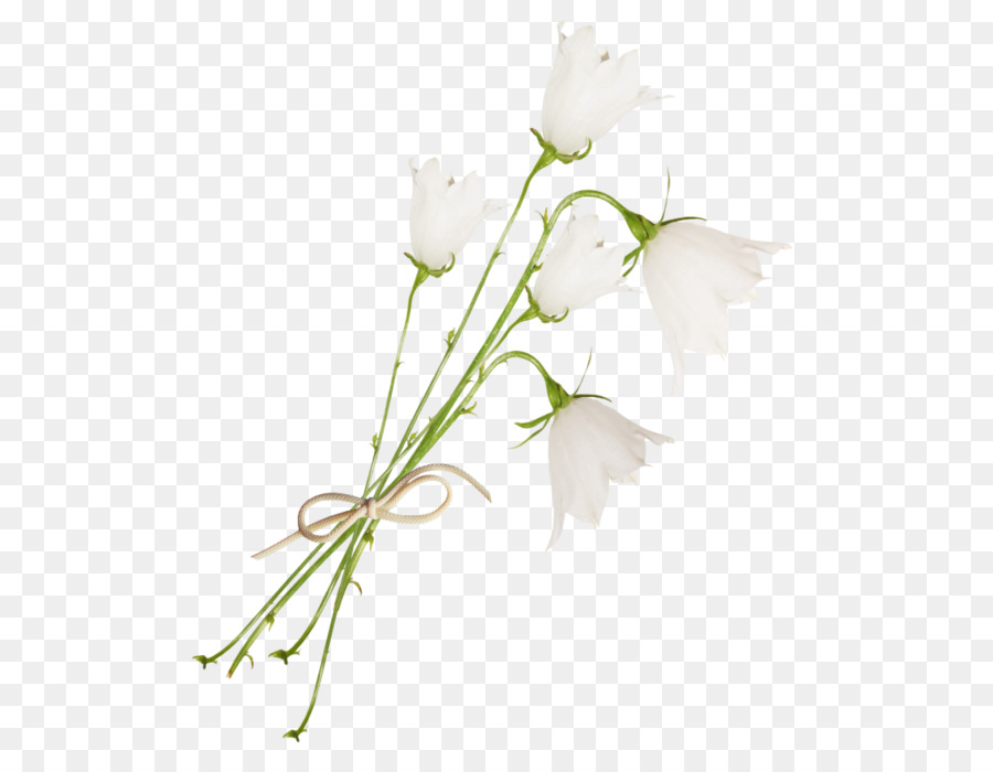 Floral design bellflowers cut flowers white flower png download floral design bellflowers cut flowers white flower mightylinksfo