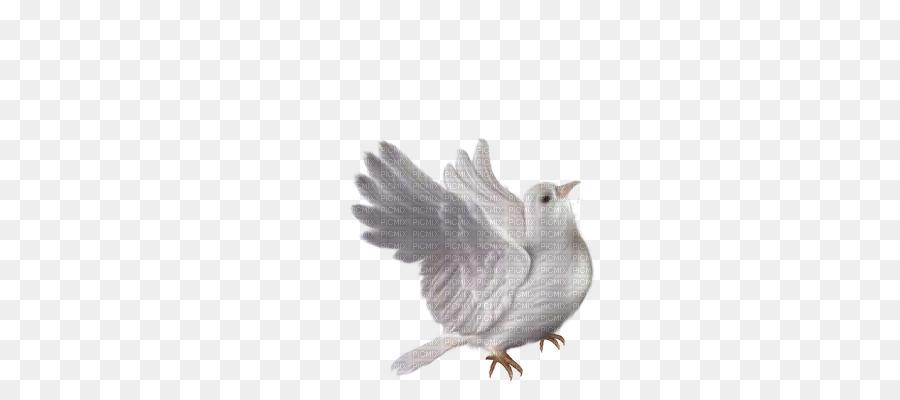 Rock Taube Columbidae Vogel Hochzeit Clip Art Vogel Png