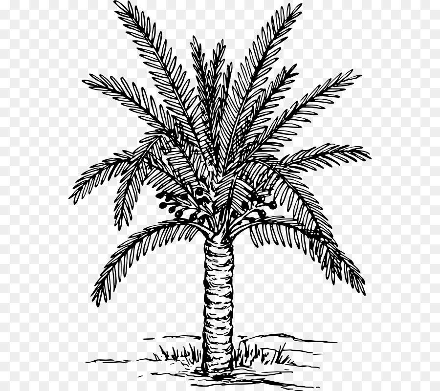 Arecaceae Fecha del sorteo palm Clip art - fecha de la palma png ...