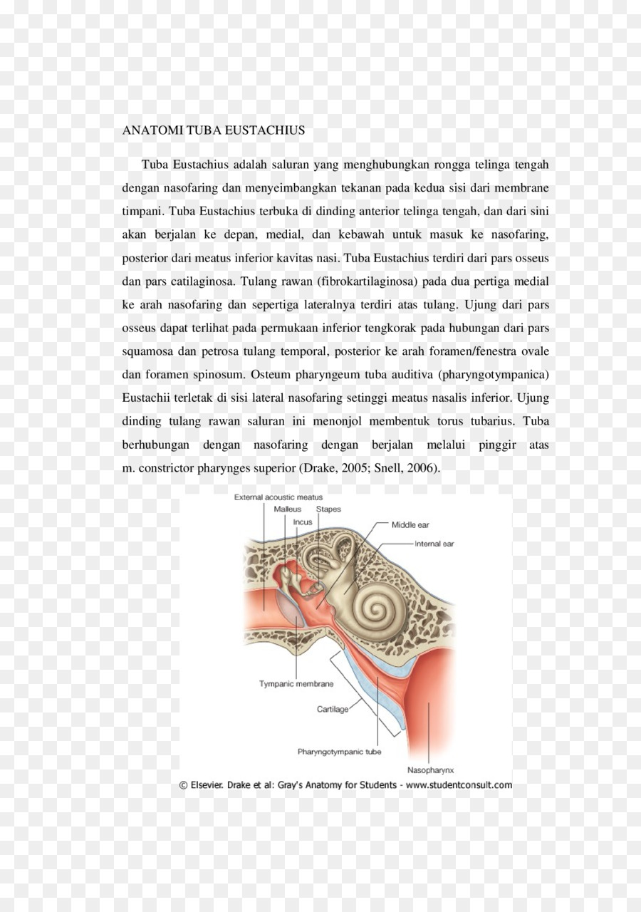 Eustachian tube Anatomy Cartilage Palpation Ear - tuba 1653*2339 ...