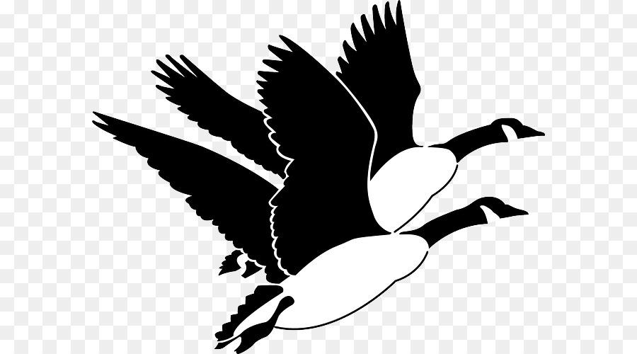 Canada Goose Bird Clip art - ganso Formatos De Archivo De Imagen ...