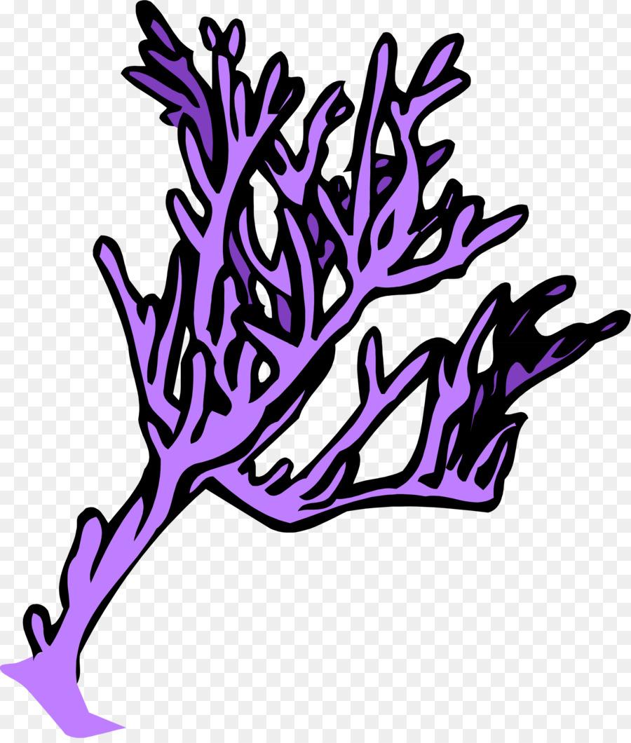 Libro para colorear de dibujos animados Clip art - los corales png ...
