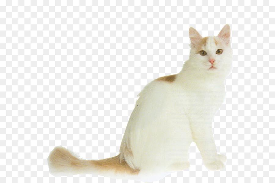Turkish Van Turkish Angora Van Cat British Shorthair British