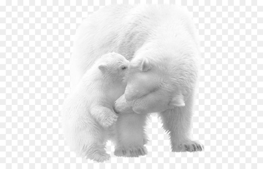 Vicks Kutup Ayısı Yavrusu Amerikan Siyah Ayı Hayvan Boyama Kutup