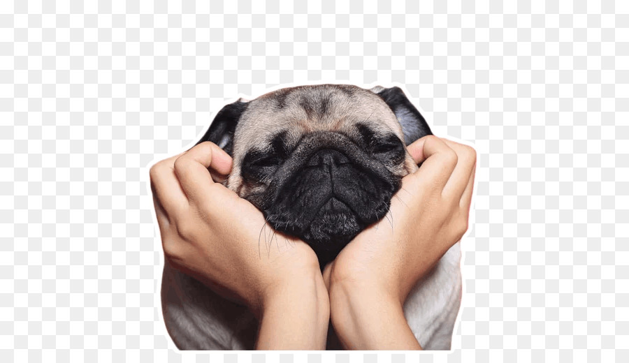 Pug IPhone 7 Desktop Wallpaper 6 French Bulldog