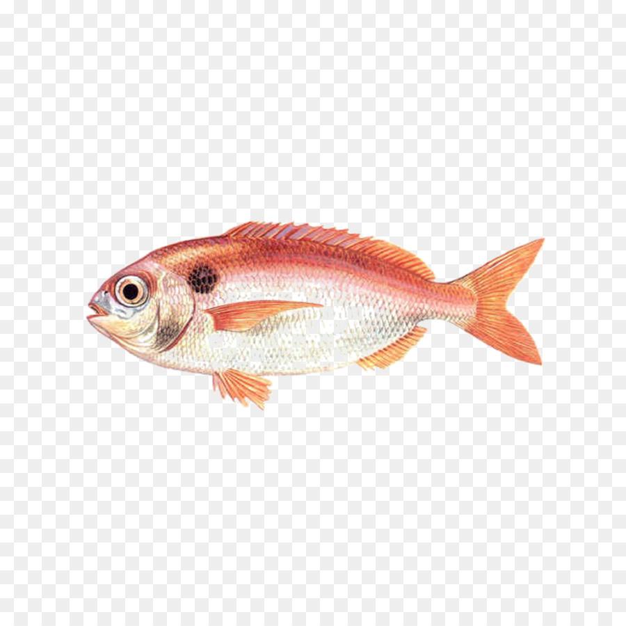 Angelfish Red Seabream Common Pandora Fish Png Download 964964