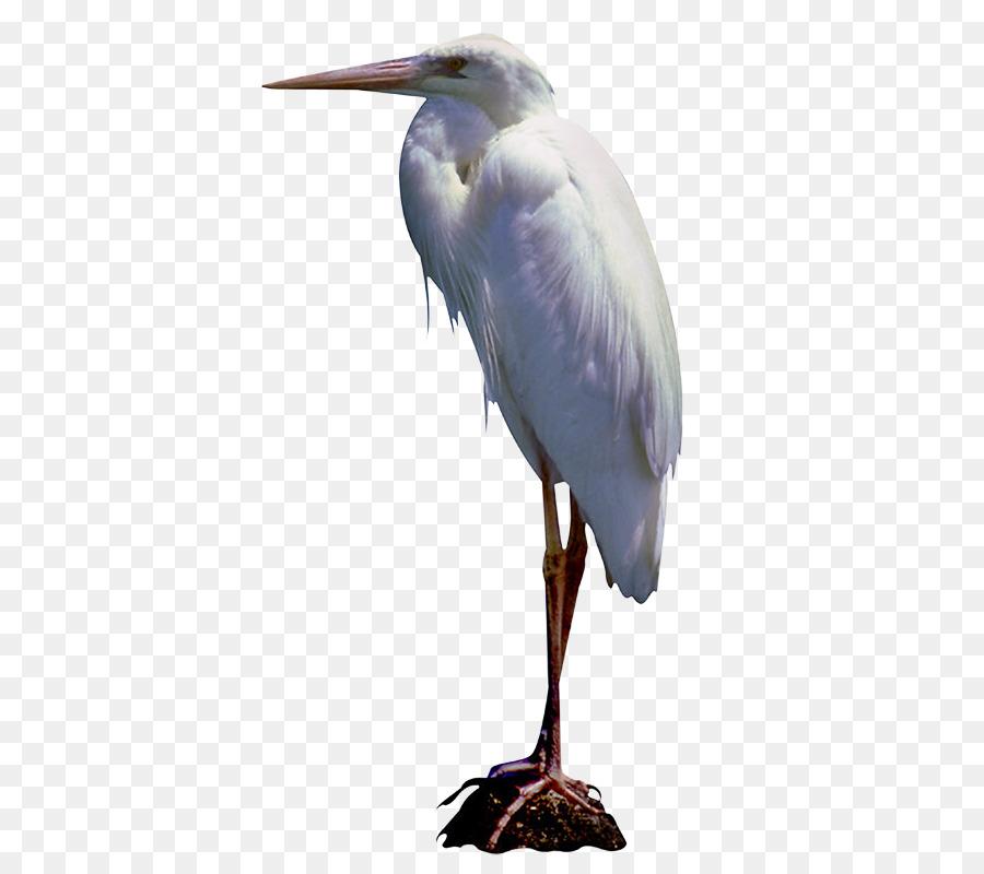 Crane Bird png download - 488*792 - Free Transparent Great