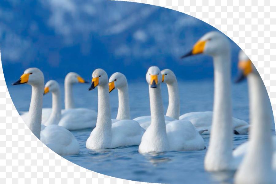 Desktop Wallpaper Computer 1080p Santa Banta Swan Png Download