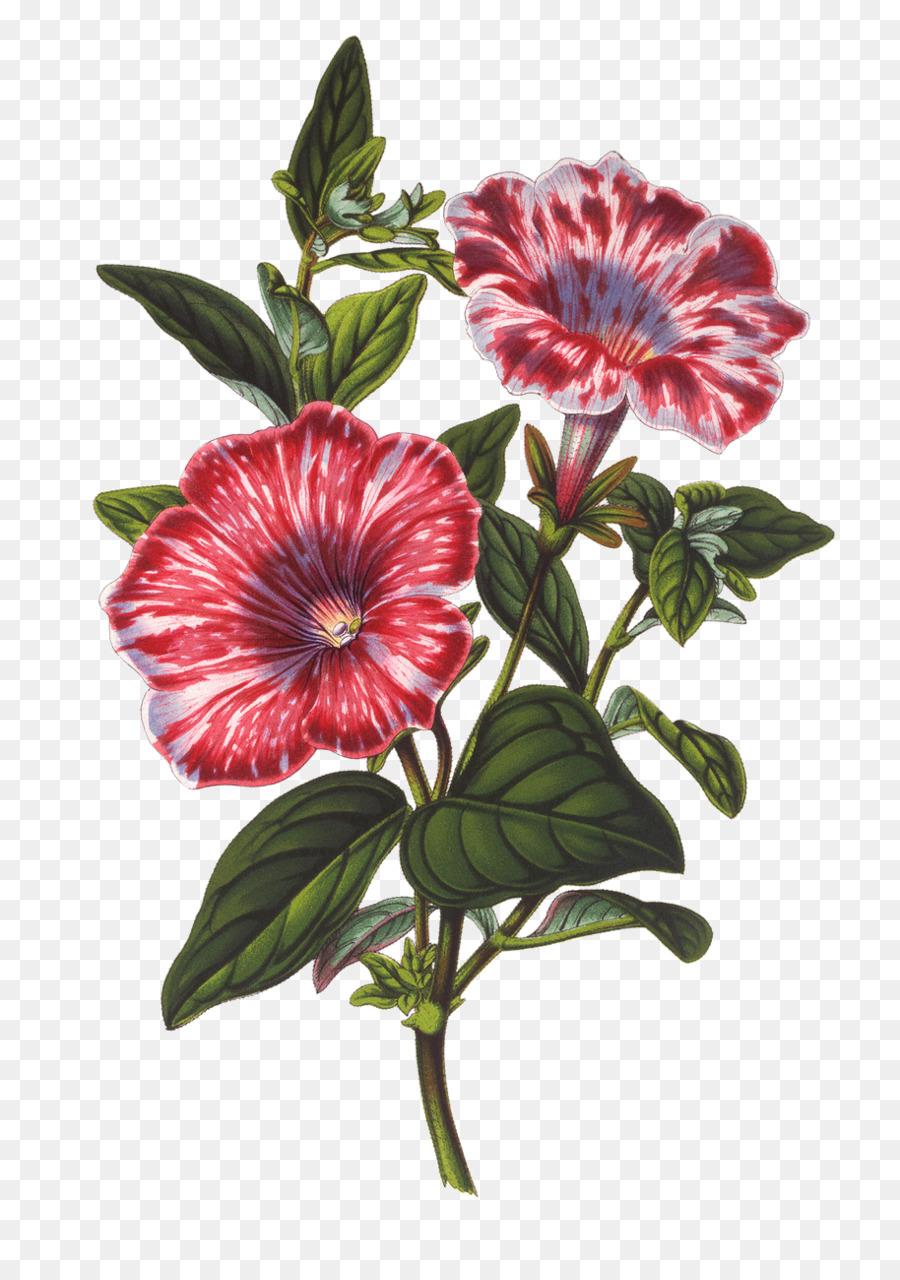 Botanical Illustration Botany Drawing Jasmine Flowers Png Download