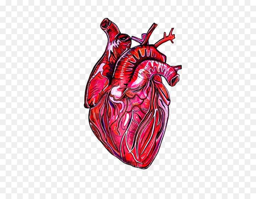 La Asociación americana del Corazón Humano anatomía de Dibujo ...