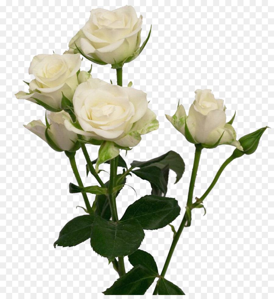 Cut Flowers Garden Roses Wedding Flower Bouquet White Rose Png