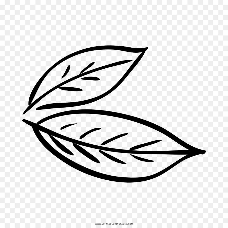 folha de louro livro de colorir desenho da baía de louro folha