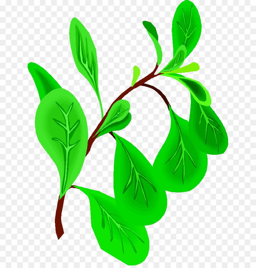 oregano herb basil clip art affittacamere la guglia png download rh kisspng com Mint Leaves Clip Art Pineapple Clip Art