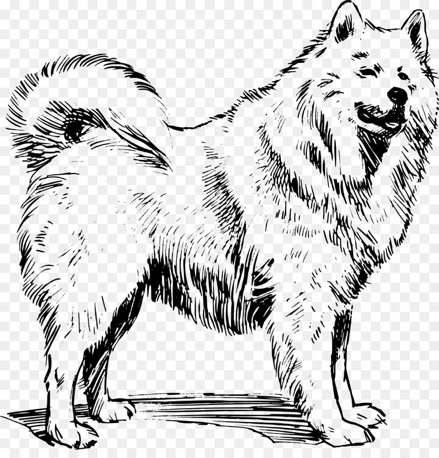 Samoyed Dog Canadian Eskimo Dog Greenland Dog German Spitz Mittel