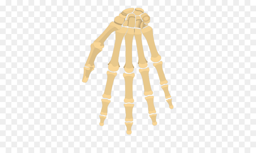 Carpal Bones Phalanx Bone Wrist Hand Hand Png Download 770533