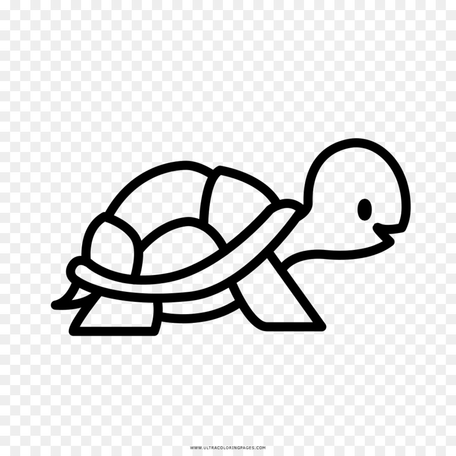 Turtle Coloring book Drawing Clip art - turtle png download - 1000 ...