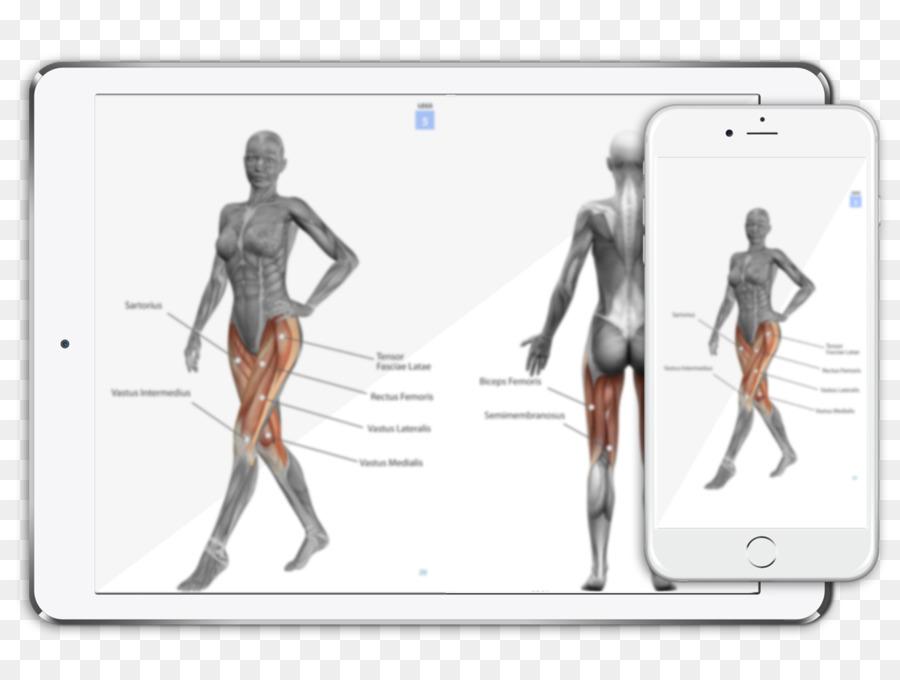 Anatomía Muscular del cuerpo Humano de la Mujer - mujer Formatos De ...