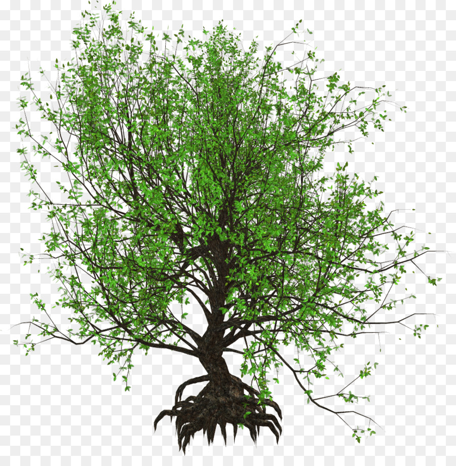 La rama de los Árboles para Jardines Pequeños de Jardín de diseño ...