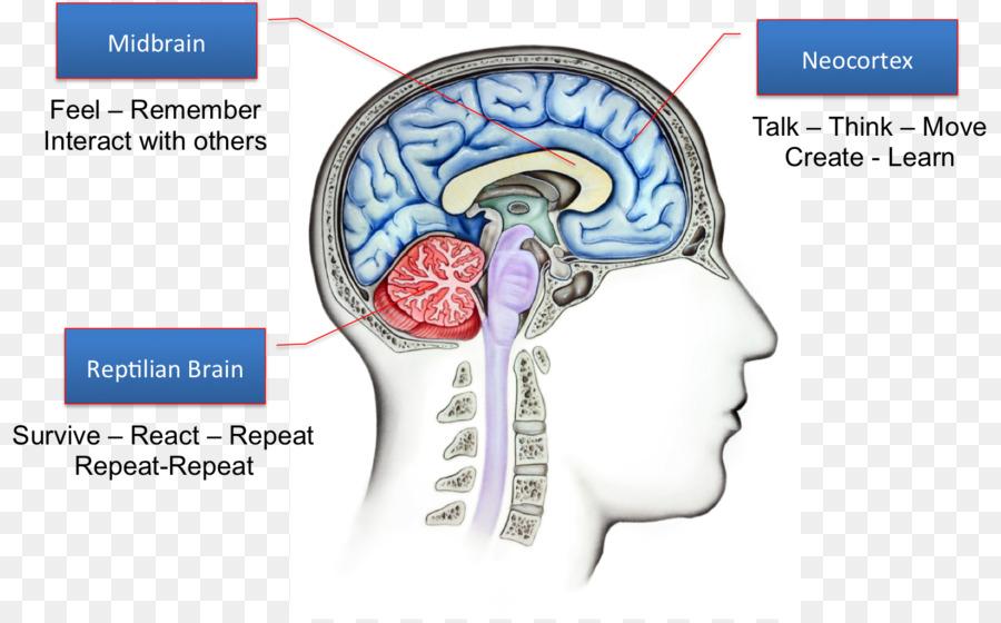 Reptil del cerebro Triuno sistema Límbico, la Amígdala - Cerebro ...