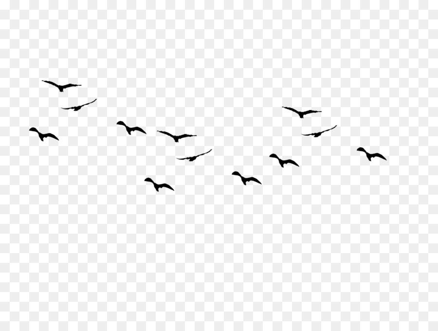 Bird Flock Clip Art Bird Png Download 1167876 Free
