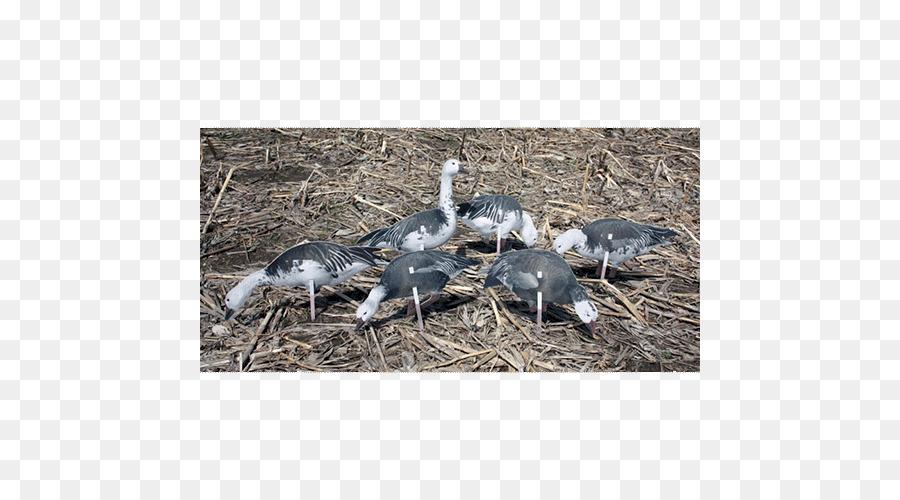 Snow goose Decoy Crane Canada Goose - goose png download - 500*500