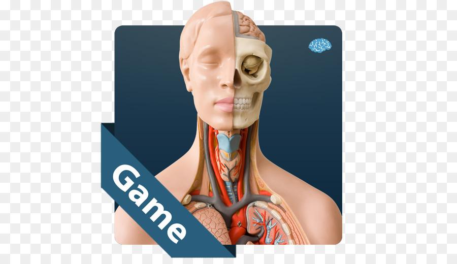 Anatomía Más Inteligente Que... - android png dibujo - Transparente ...