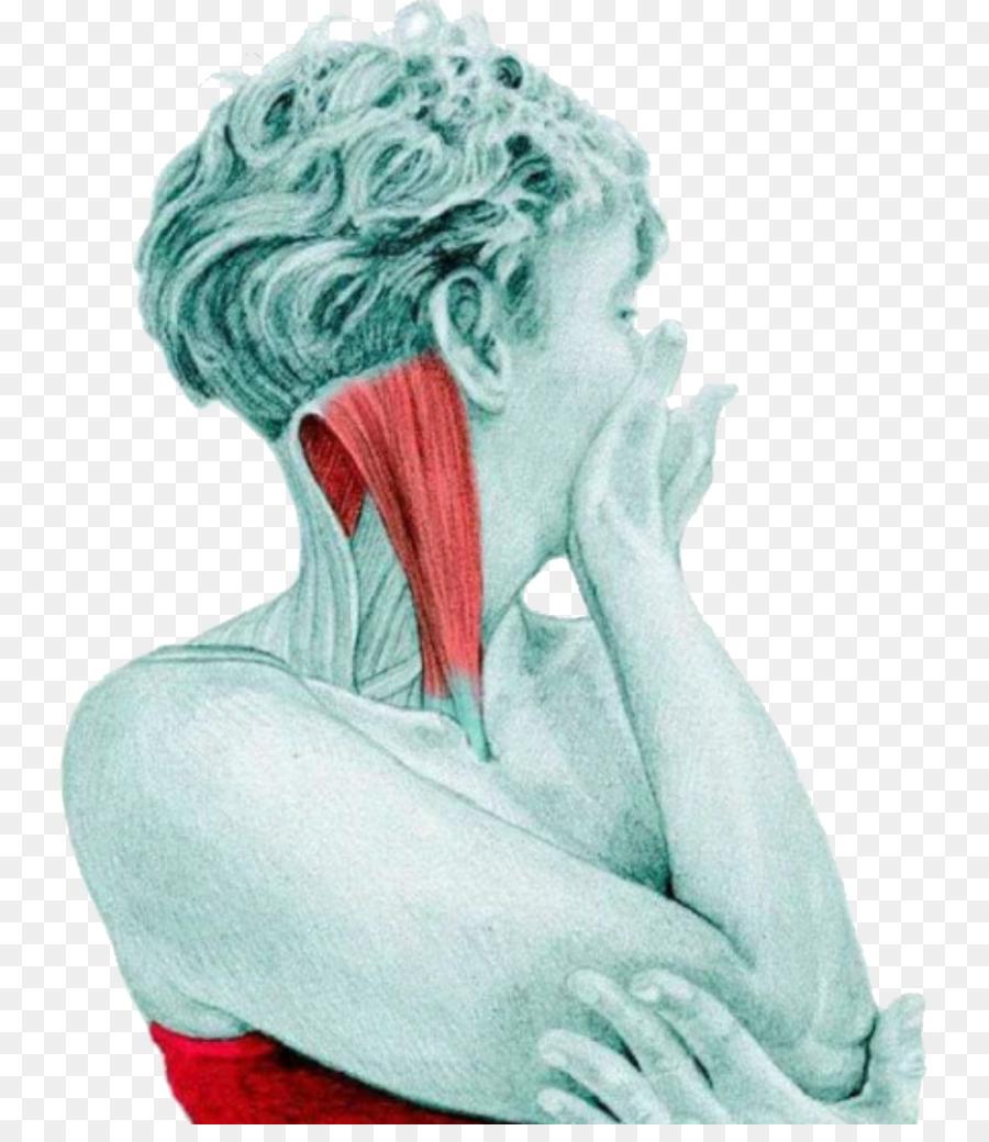 El Estiramiento De La Anatomía Del Ejercicio De Pilates Muscular ...