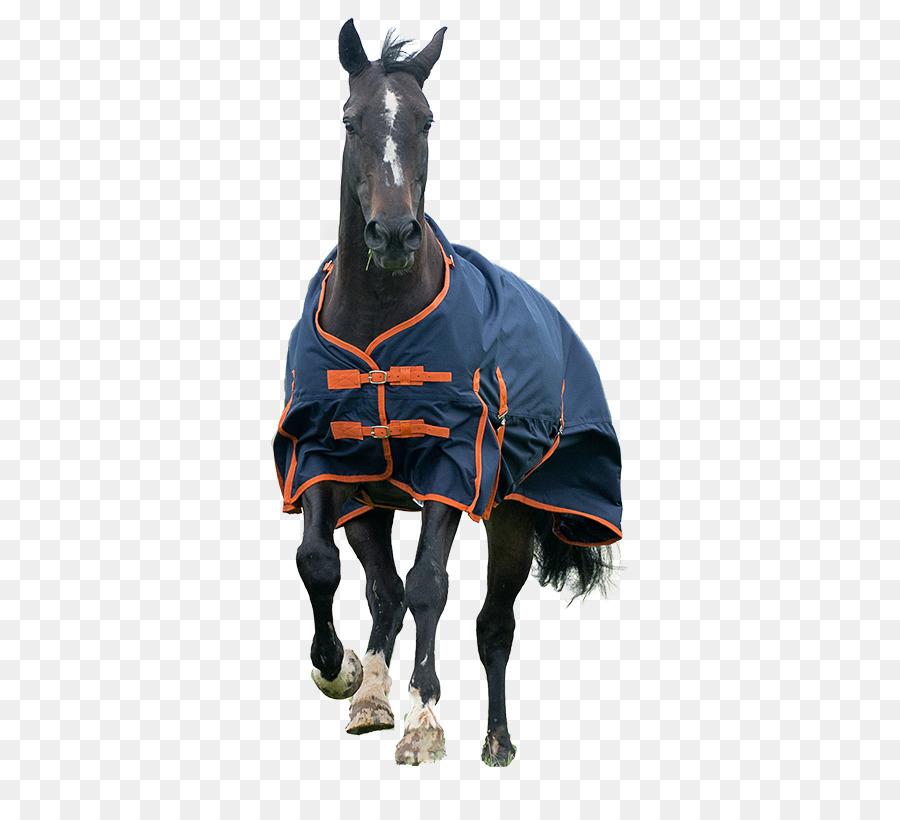 Carpet Cleaning Horse Tack Furniture