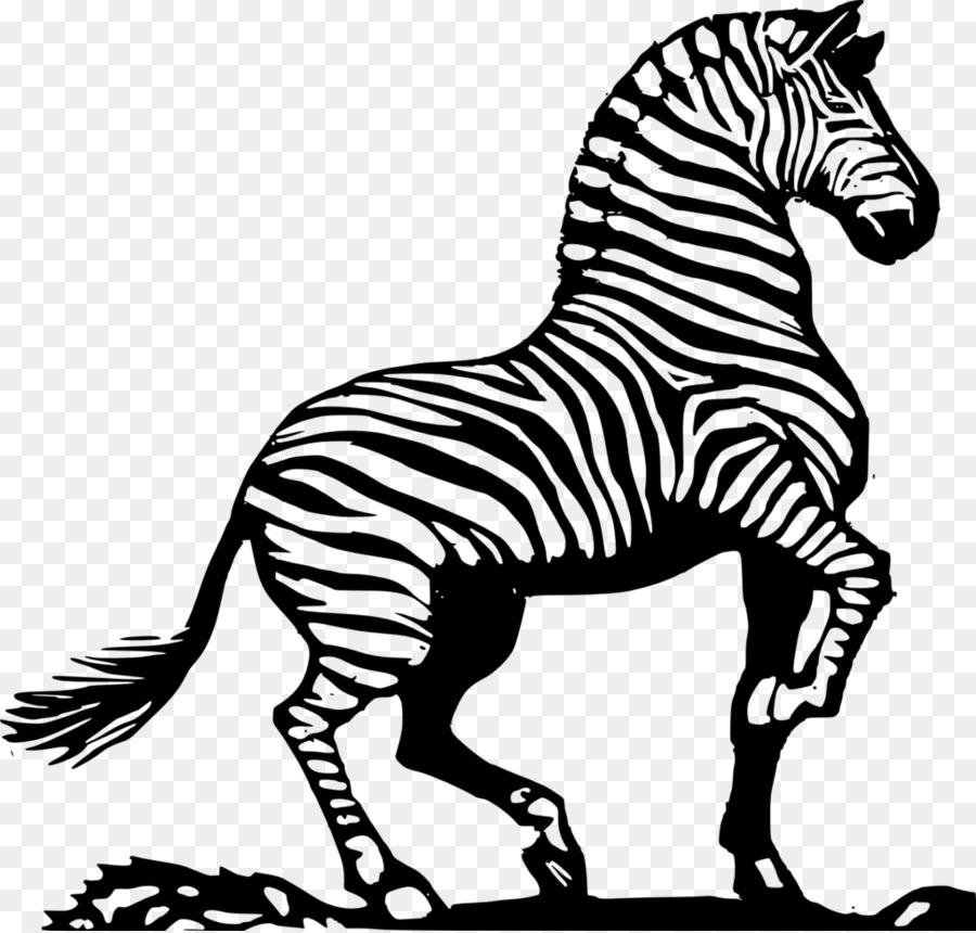 Drawing Line art Zebra Coloring book Clip art - zebra png download ...