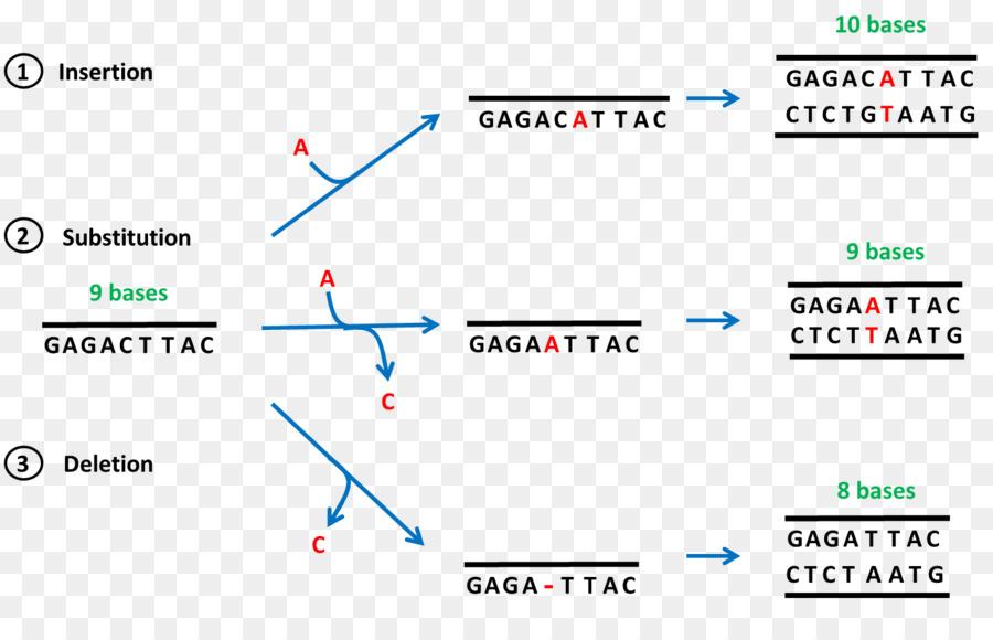 Frameshift mutation Point mutation Deletion DNA - others png ...