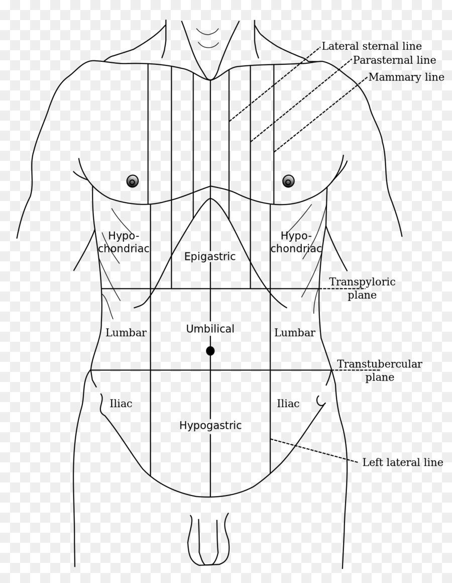 Gray\'s Anatomy Abdominal tenderness Epigastrium Abdomen Hypogastrium ...