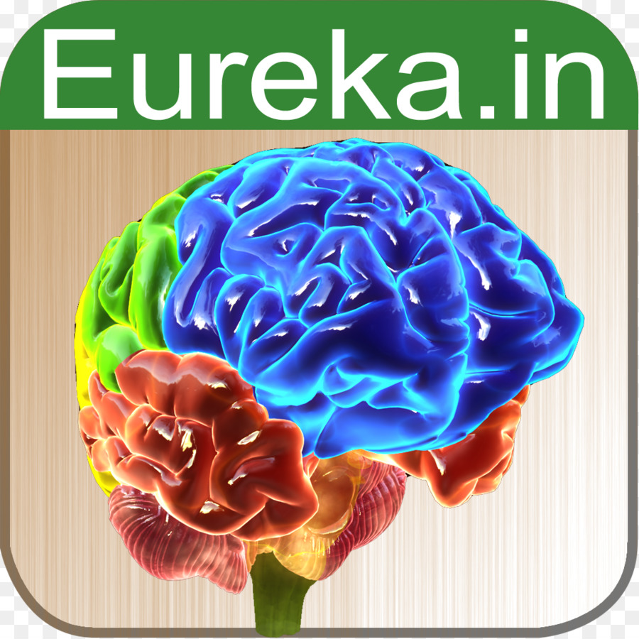 Brain Anatomy Function Biology App Store - Brain png download - 1024 ...