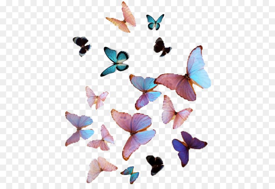 Mariposa Ternura Victon Estética De Color - mariposa png dibujo ...