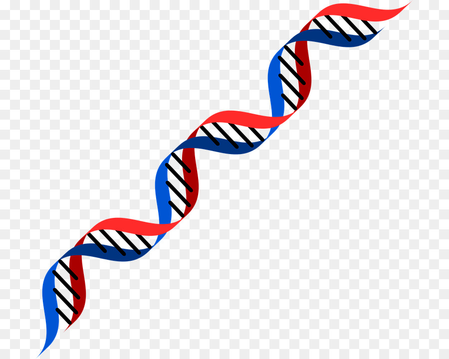DNA Genetics RNA Genetic Testing Clip Art