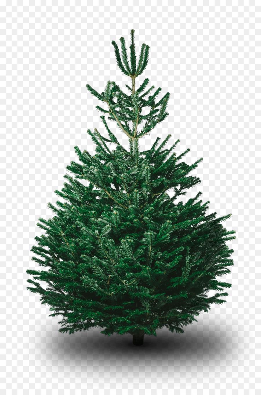 Nordmann fir Fraser fir Artificial Christmas tree - christmas tree ...