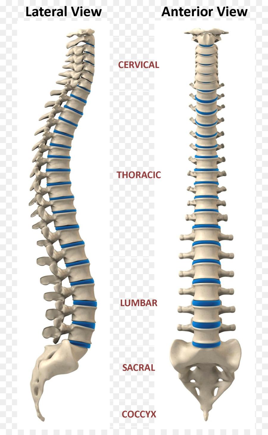 La terapia craneosacral, la Cirugía de Escoliosis de la columna ...