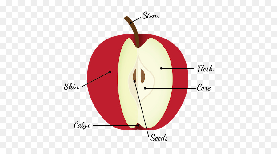 Apple Pie Diagram Fruit Anatomy Seed Fruit Anatomy Png Download