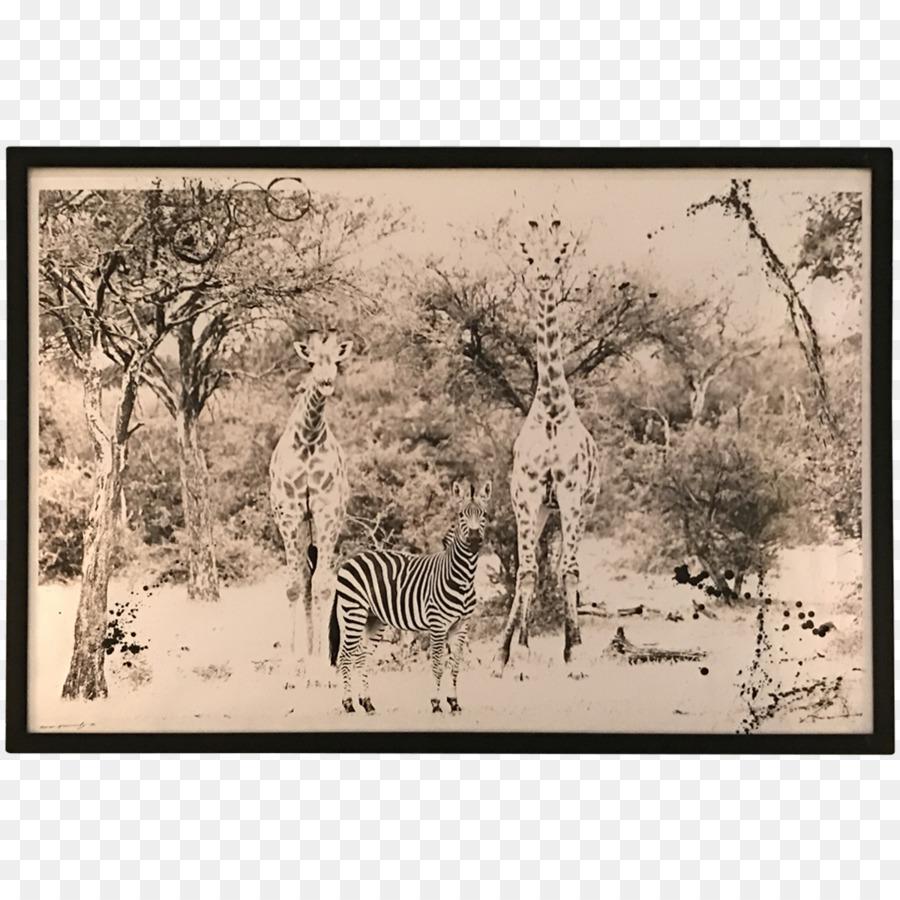 Giraffe Ecosystem Fauna Savanna Picture Frames - african landscape ...