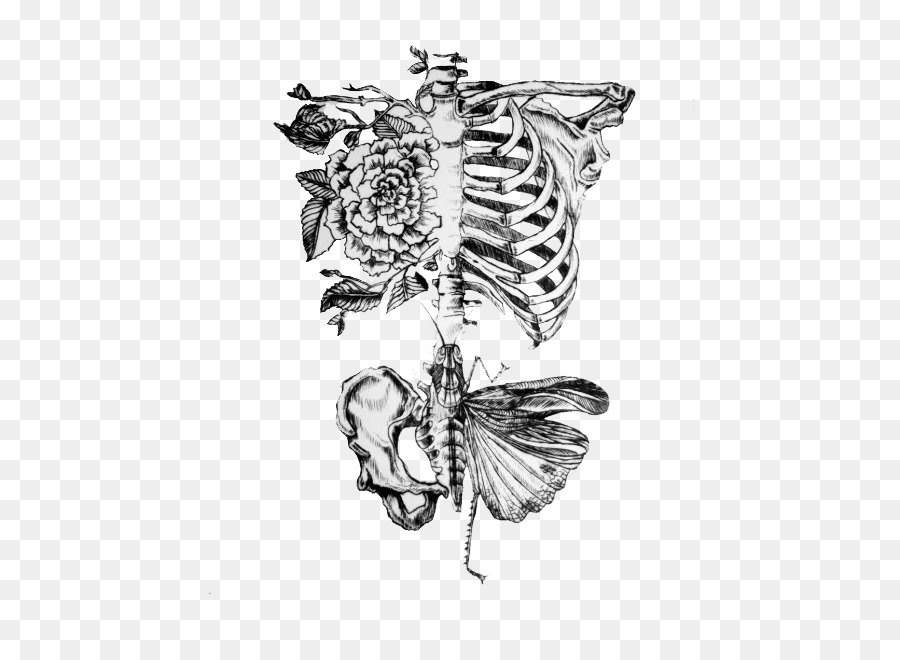 Anatomy Human body Human skeleton Drawing Rib - Axial Skeleton png ...