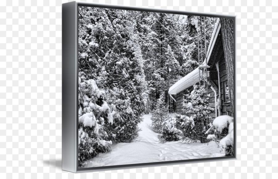 Tree Picture Frames Snow White Dagens Nyheter Forset Cabin Png