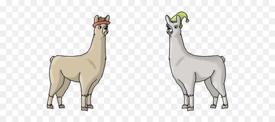 c44ae5cf31f Llamas with Hats Vicuña Alpaca - llama png download - 640 400 - Free  Transparent Llama png Download.